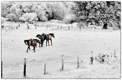 Horse Herd  08 23 11  008