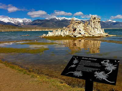 Interpretive Sign and tufa Mono Lake, California