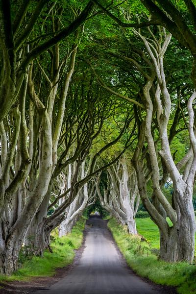 The Dark Hedge,  Northern Ireland