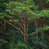 Mourne Mountain Trees
