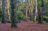 Crawfordsburn Country Park