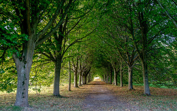 Lime Tree Walk, Castleward