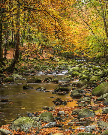 Shimna River, Tollymore Forest Park