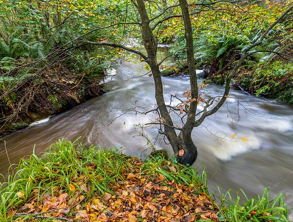 Meeting  of the waters - Crawfordsburn Country Park