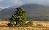 Annalong Valley