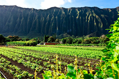Ko'olau Mountains in Waimanalo