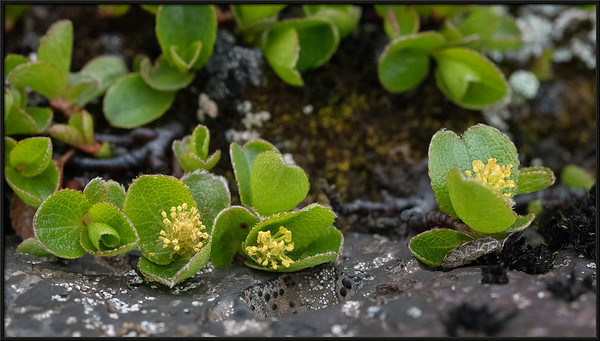 Little Plants on Lava