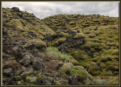Old vegetation on Lava