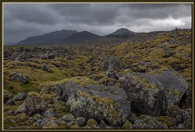 Old vegetation on lava rocks