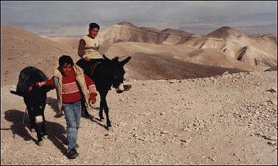 Israel. Bedouin boys on donkeys.