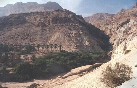 Israel. Oasis near the Dead Sea.