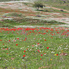 Blossem in Lachish area
