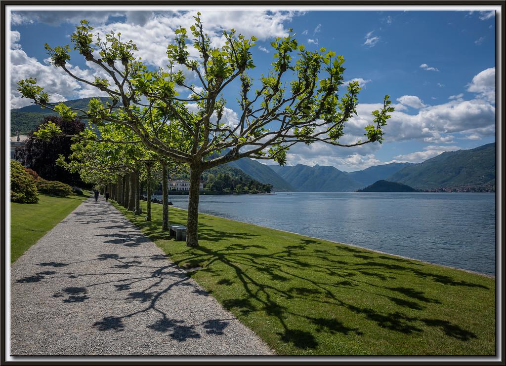 Bäume und ihre Schatten