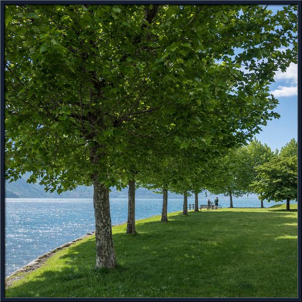 Baum-Allee am Comer See