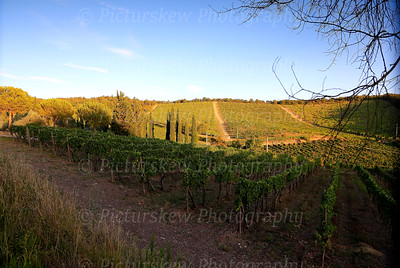 Vines in the evening