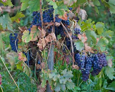 Early Autumn in Lamole