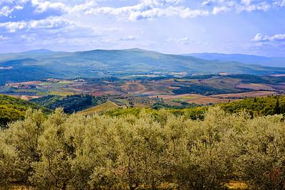 Olive Groves of Fonterutoli