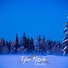 46  G Fog and Snowy FIr