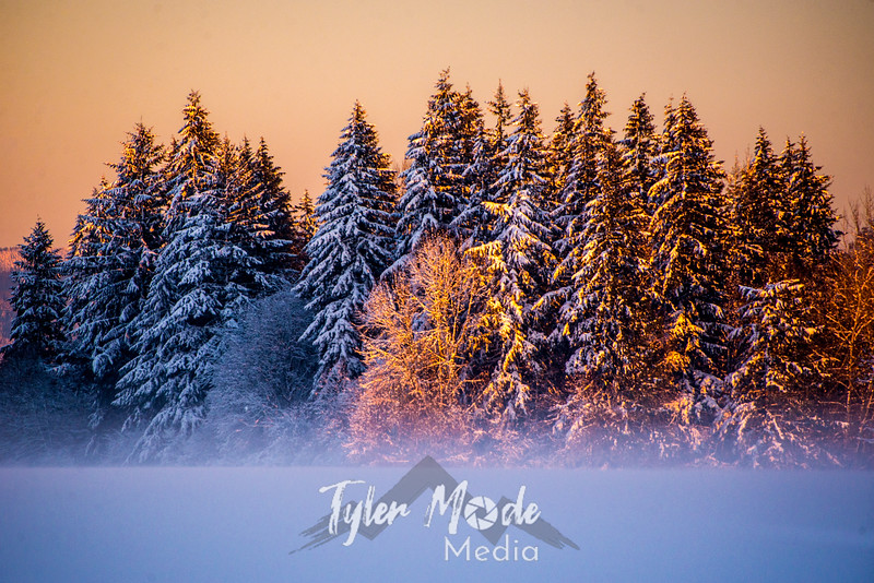 18  G Snowy and Foggy Sunset Fir Trees