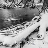 29  G Lewisville Park Snow Tree Roots BW