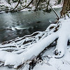28  G Lewisville Park Snow Tree Roots