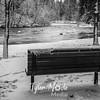 50  G Lewisville Park Snow Evening Bench BW