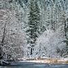 14  G Lewisville Park Snow Tree V