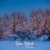 22  G Snowy Sunset Trees
