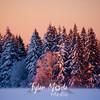25  G Snowy Sunset Fir Trees