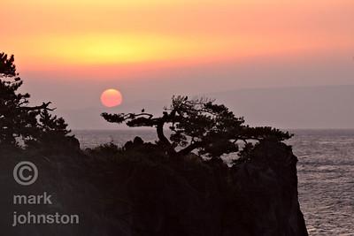 The sun rises over Oshima, one of the seven Izu Islands, silhouetting a pine clinging to the volcanic cliffs of the Izu Peninsula, Shizuoka Prefecture, Japan.