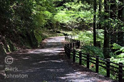 A peaceful sun-dappled track in the mountains of the Izu Peninsula, Shizuoka Prefecture, Japan.