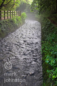 A flowing stream carries rainwater down out of the mountains of the Izu Peninsula, Shizuoka Prefecture, Japan.