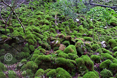 Moss-covered boulders lie strewn down a steep hillside in the mountains of the Izu Peninsula, Shizuoka Prefecture, Japan.