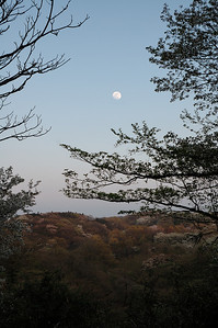 Moon rise over Maioka Park, Yokohama.  横浜市の舞岡公園.