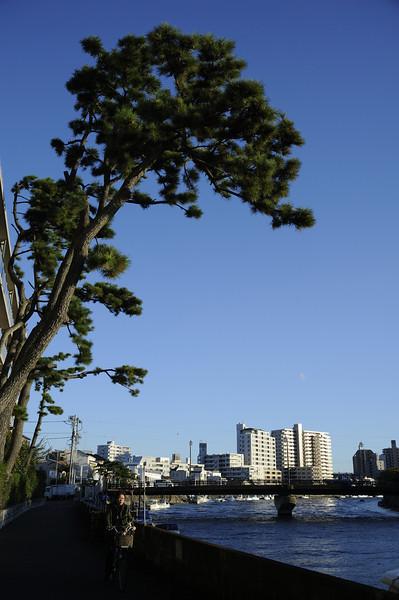 Along the Sakai river in Fujisawa.