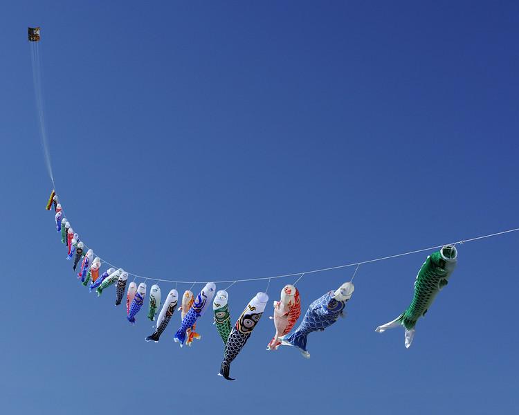 Koinobori 鯉のぼり
