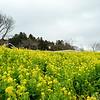 Chiba_17 02_0333