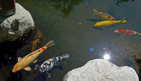 Japanese Garden, Balboa Park, San Diego