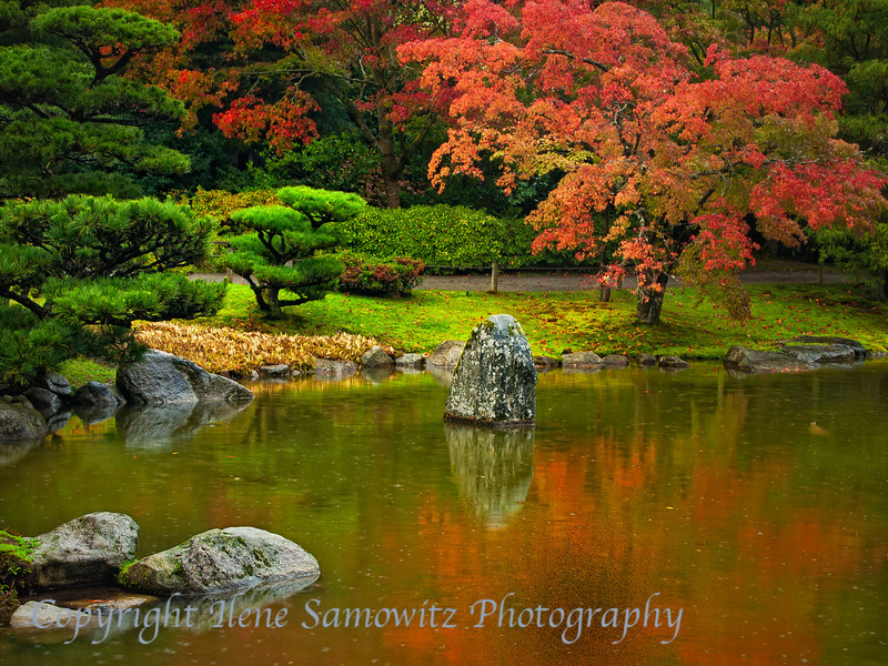 Fall Reflections in the Japanese Garden