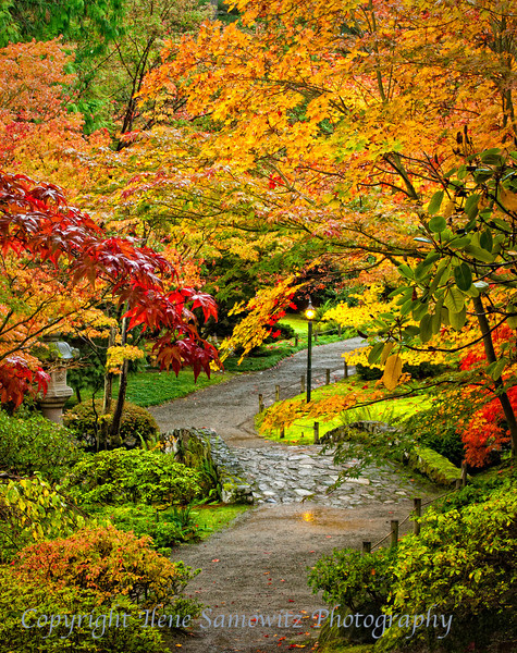 Garden Path in Fall