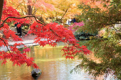 Japnese Gardens in the Fall