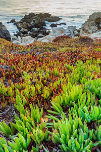 Wild Sunset Succulents