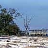 Jekyll Island Fishing Pier as Seen from Driftwood Beach at Jekyll Island, Georgia