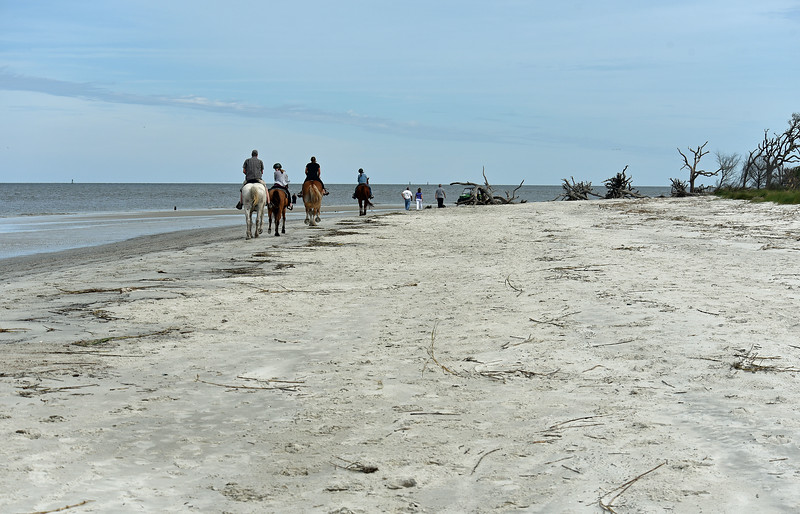 Jekyll Island North End - Golden Ray and more 10-18-19