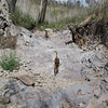 American Springs Road above Armstead Spring - near the top of the dry spring. Moki watching while Ibn runs with stick.