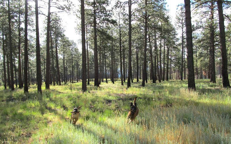 July 2012 - One year after the fire at American Springs - favorite mushroom area - hard to tell the fire went through here.