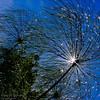 """""""Sparklers"""" - Chanticleer Gardens"""