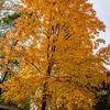 Autumn_2012_06