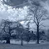 Morris Arboretum Sky