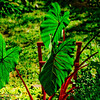 Backlit_Leaves